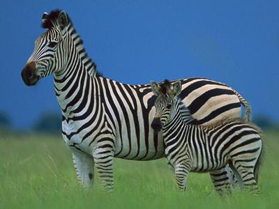 神农架发布野生动物禁捕令