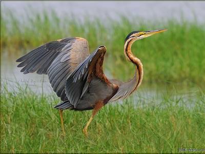 85只野生动物回归自然
