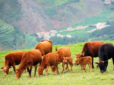 RFID畜牧业养殖管理系统