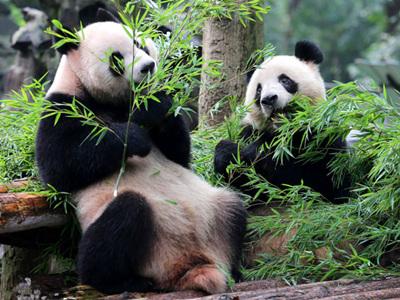 杭城动物园扎紧安全篱笆