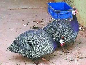 东莞街坊过年可以去动物园看珍稀野鸡