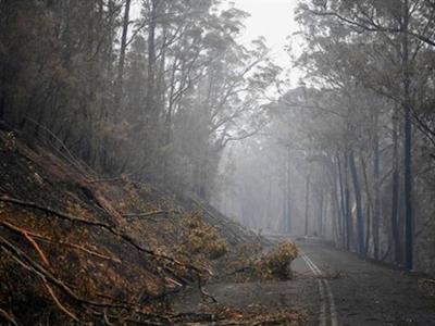 澳山火致上亿动物死亡