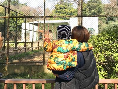 """南京红山动物园重新""""迎客"""""""
